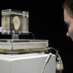 La fameuse oreille de Van Gogh est enfin réparée… grâce à une imprimante 3D !